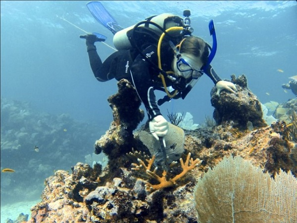 Coral-horned-diver-at-Punta-Cana-768x577