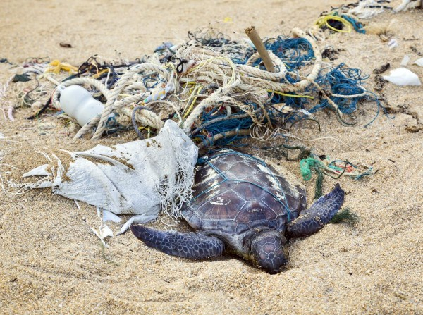 Pollution-Ocean-Beach-Garbage-Dead-Turtle-e1487237082132