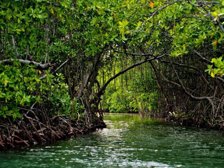 puerto-rico-mangroves-800x600.jpg