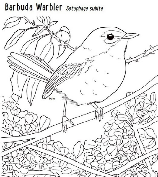 Endemic Birds Of The West Indies Colouring Book Repeating Islands