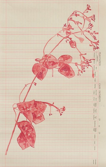 Annalee-Jasminum-fluminense-Wild-Jasmine-Ink-Vine