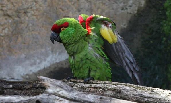 parrot4467